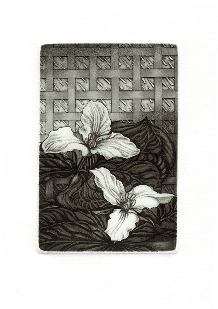 Renewal // etching // Gail Gwinn // all rights reserved